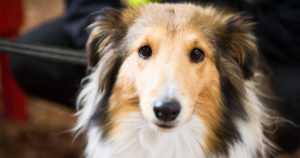 Vietä turvallinen loppuvuosi koiran kanssa – nämä ruoat ovat koiralle kiellettyjä