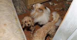 """""""Kornelia"""" ja """"Lea"""" myivät kaltoin kohdeltuja koiranpentuja netissä – rikostutkijat pyrkivät tavoittamaan ostajat"""
