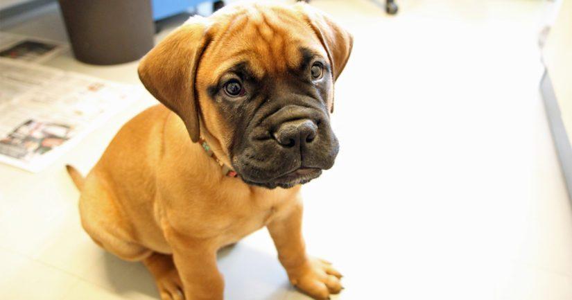 Pilaantunut tai muutoin epäsopiva ruoka, myrkylliset tuotteet tai ylensyöminen voivat aiheuttaa koirille ongelmia.
