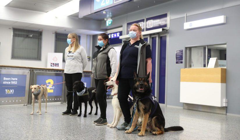 Koronakoirat Kössi, Miina, E.T ja Valo on otettu lentokentällä vastaan positiivisesti.