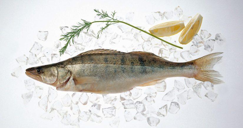 Kotimaisen Kalan Ystävät -ryhmän toimintaa pyörittävä Leena Jääskeläinen on vannoutunut kuhan ystävä.