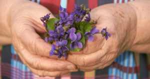 Vanhuksen ihastuminen kukkasiin ajoi rikoksen polulle – näpistysreissut aamuisin rollaattorilla