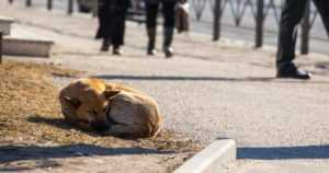 Villikoiralauma tuli Venäjältä jälleen rajan yli – poliisi varoittaa lähestymästä koiria