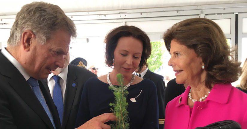 Presidentti Niinistö, rouva Haukio ja kuningatar Silvia tutkivat suomalaista havupuun taimenta Kungsträdgårdenissa, Tukholmassa Suomi100-juhlissa.