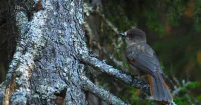 Etelän lintulajit yleistyvät ilmastonmuutoksen mukana