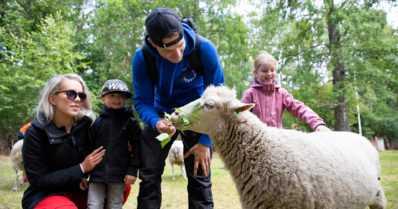 Haluaisitko ryhtyä lammaspaimeneksi Suomen suven keskelle? – Vastustuskyky paranee ja stressi lievittyy