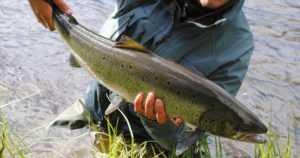 Kalastaessa voi ylittää jokialueella kulkevan sisärajan – mutta rantautua ei saa toisen valtion alueelle