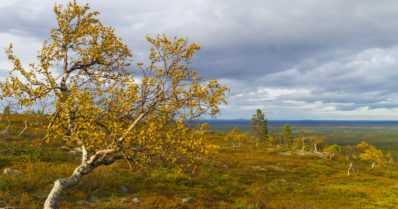 Syksy on ollut tavanomaista viileämpi – ensilumi satoi tuntureilla ja aurinko paistoi vähemmän