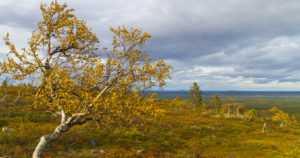 Ilmakehän raskasmetallien pitoisuudet ovat vähentyneet Suomessa voimakkaasti – poikkeuksena elohopea