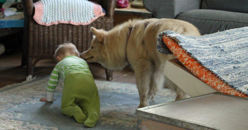 Koiran ja ihmisen yhtäaikainen allerginen oireilu näyttää liittyvän elinympäristön mikrobeihin.