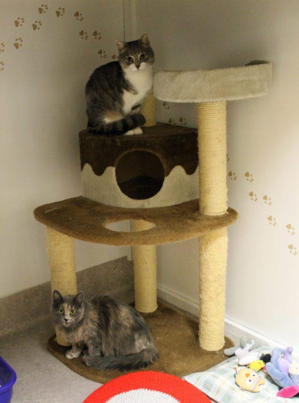Leo ja Mimosa asuivat ennen yhteiseen häkkiin muuttoa naapureina. Toisistaan tykkäävä kaksikko viihtyy yhdessä.