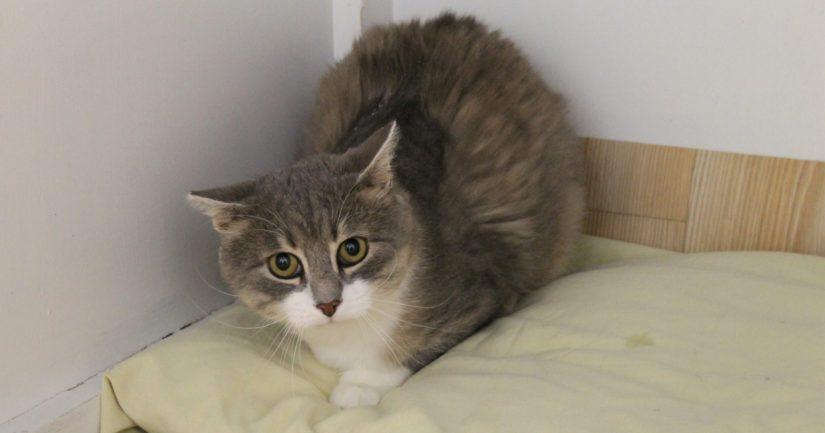Leo on saanut nyt myös rakastavan loppuelämän kodin. Kollipojan adoptoi perhe, joka oli alun perin ollut myös pelastamassa kissakulkuria.