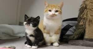 """Löytöeläinkodilla on ollut vilkas syksy – """"Kissapopulaatioita löytyi surullisen paljon"""""""