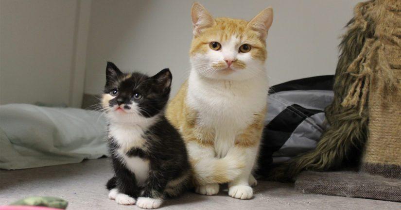 Taustalla on kahden ison kissapopulaation löytyminen, joista ovat kotoisin myös kuvassa olevat äitikissa ja pikkutyttö.