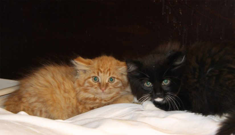 Tavoitteena on, että mahdollisimman moni ja mieluummin kaikki kissat saataisiin turvaan talven alta.