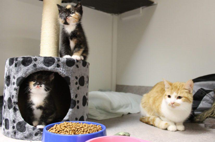 Löytöeläinkodille etsitään nyt myös uusia vapaaehtoisia. Ja eläinrakkaita kissojen pelastajia tarvitaan myös Kalajoki-Himanka -alueelle, joissa esimerkiksi loukutusten tarve on suuri.