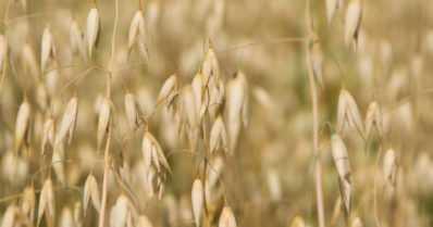Euroopan parlamentti hyväksyi uusia sääntöjä luomutuotantoon – sekatilat sallitaan jatkossa