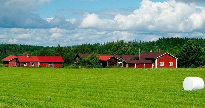 Suomen maatalous- ja puutarhayrityksistä 86 prosenttia oli edelleen perheviljelmiä.