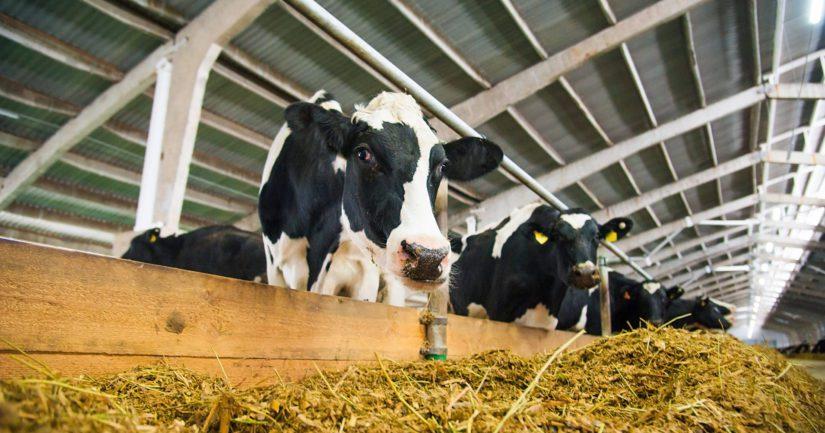 Maatalouden tuensaajista oli maitotiloja reilu 55 000 kappaletta, pudotusta edellisvuoteen oli noin 2 500 tilaa.