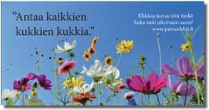 """Päivän sitaatti: """"Antaa kaikkien kukkien kukkia."""""""