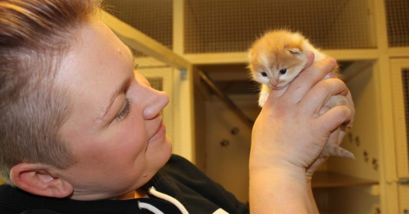 Mari Lehkonen sanoo löytöeläinkotiin tulevan entistä enemmän myös pieniä kissavauvoja. – Näitä löytyy niin tien varsilta kuin metsäpoluiltakin. Yksi kissanpentu oli joutunut jopa ambulanssin konepellin alle.