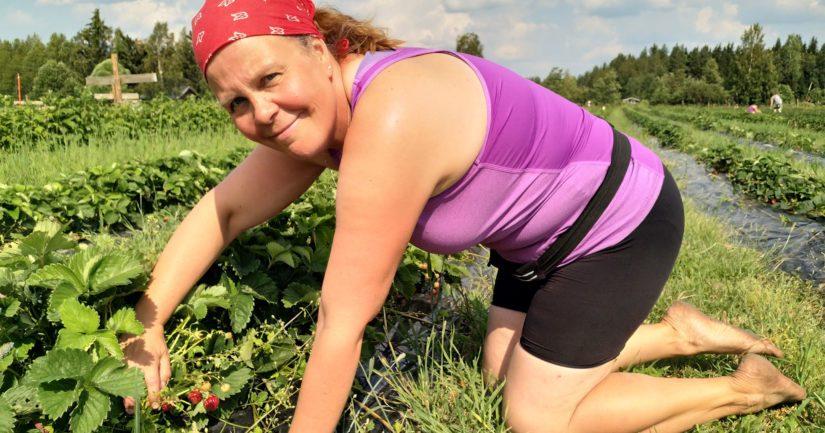 – Ensi kesänä mansikka-alaa kasvatetaan, sillä ostimme neljän hehtaarin verran lisäpeltoa, Marika Kamps sanoo toiveikkaana.
