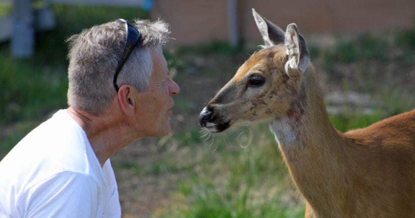 Villieläinhoitola vastaanottaa vuodessa noin 200 eläintä, joukkoon mahtuu myös muun muassa auton töytäisemäksi jääneitä kauriita. – Olen tavattoman onnellinen. Ympärillä on tilaa olla, elää ja nauttia eläinten tarjoamasta ihmeellisestä maailmasta.