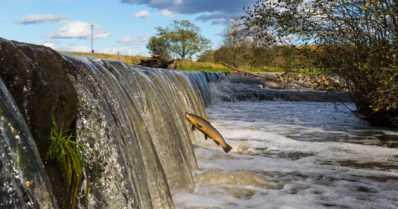 Patojen purkaminen saa kannatusta suomalaisilta – jokia kunnostetaan maailmalla kalaystävällisiksi