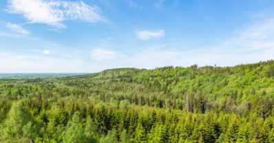 Kiina uskoo suomalaiseen selluun – tukea uusiutuvien luonnonvarojen käytölle