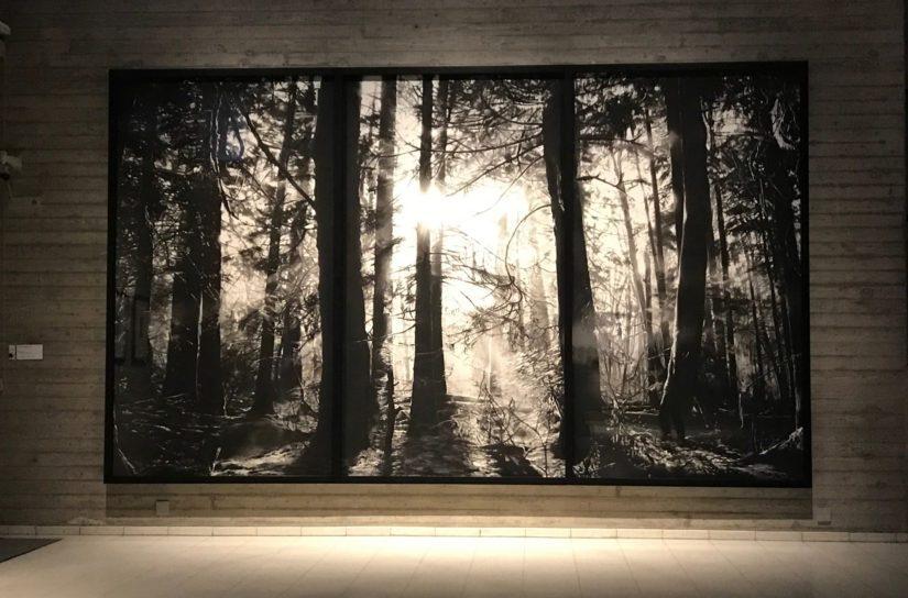 Luonnon mahtavuus näyttäytyy esimerkiksi pohjakerroksessa sijaitsevassa valonhämyisessä metsässä.