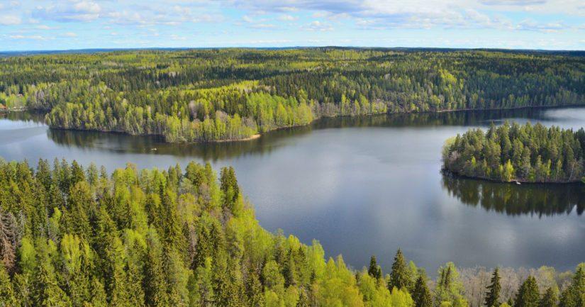 Jos hiilidioksidipäästöjen kasvu jatkuu entisellään, uhkaa havumetsävyöhyke kadota Suomesta lähes kokonaan.