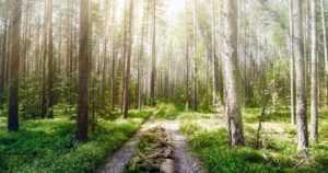 Metsähallitus kumoaa tiedot – metsäautoteitä ei olla sulkemassa