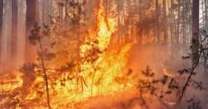 Metsäpalojen riski on nyt erityisen suuri maan pohjoisosassa – sadealue tuo väliaikaisen helpotuksen