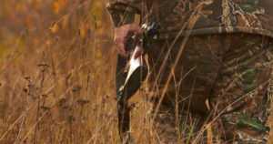 Metsästyskaudet alkavat – poliisi vastaa saako kuvauskopteria käyttää jäljittämiseen