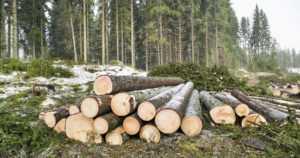 Selvitys osoittaa – metsäteollisuus on pystynyt vähentämään CO2-päästöjään muuta Suomea nopeammin