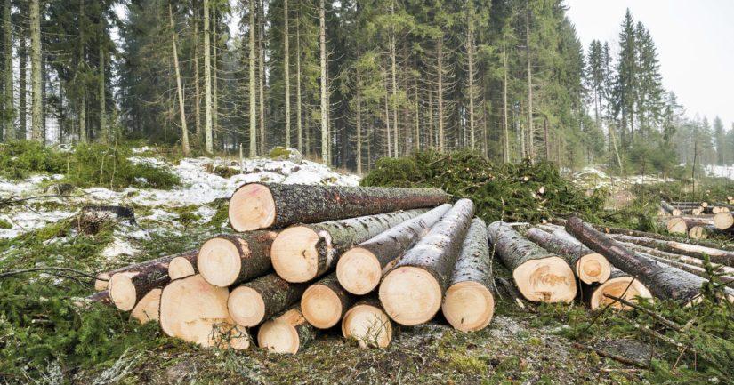 Metsätöissä ollut mies sai surmansa välittömästi.