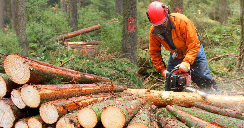 Metsäteollisuudella on Suomessa yli 150 tehdasta, jotka tarjoavat työtä noin 140 000 ihmiselle.