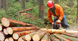 """EU:n uusi metsästrategia ylittää osin komission toimivallan – """"Lopulta Suomelle pelättyä parempi"""""""