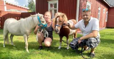 Mini-Milo on harvinaisen hellyttävä lemmikki – hevonen, joka luulee olevansa koira