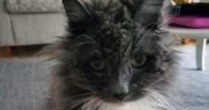 """Mosse, 21, on elänyt pitkän kissanelämän – """"Löysimme takkuturkkisen kissanpojan kuusen alta nukkumasta"""""""