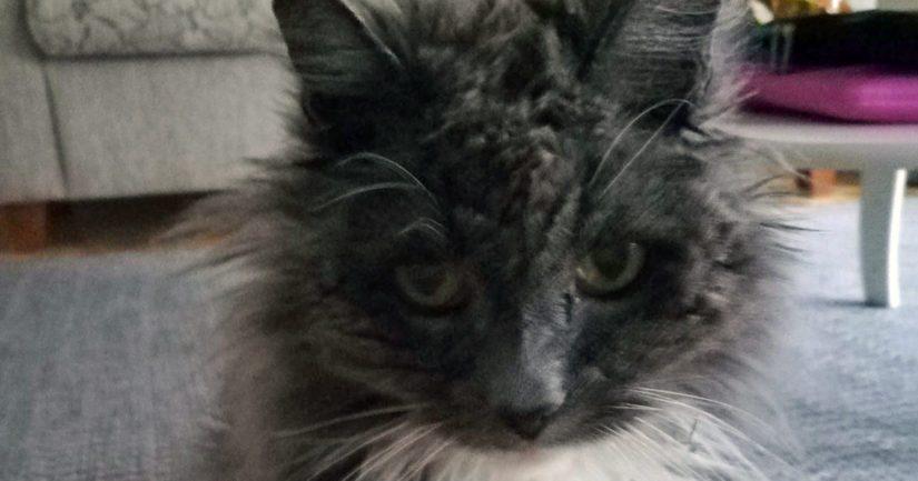 Raahelaisen 21-vuotiaan Mossen taustat ovat hieman epämääräiset, sillä kissaherra löydettiin muutaman kuukauden ikäisenä metsästä.