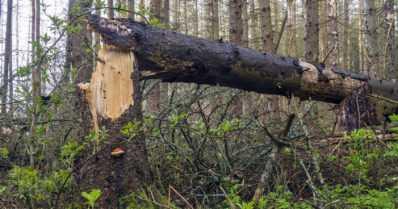 Metsätuhot ovat kasvaneet – onko syynä ilmastonmuutos?