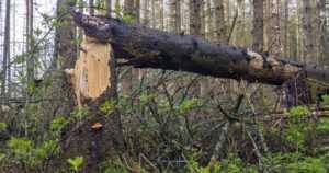 Myrsky vaati ihmishengen Oulussa – henkilö jäi kaatuneen puun alle ulkoilualueella