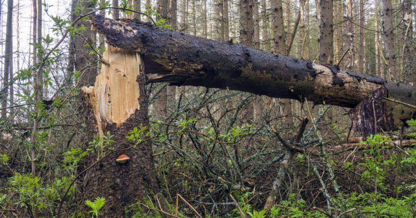 Voimakas myrsky on kaatanut ja katkonut puita