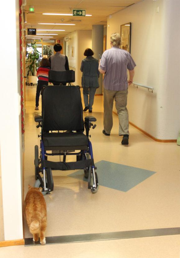 Hoitokodissa varttunut Niksu saa liikkua talossa vapaasti, kissalle annetaan myös oma rauha. (Kuva Anne Anttila)