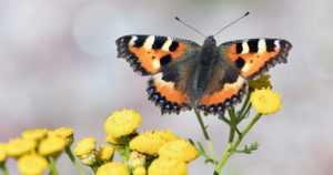 """Perhoskevät on alkanut poikkeusajasta huolimatta – """"Ihmiset ovat hakeneet hyvää mieltä lähiluonnosta"""""""