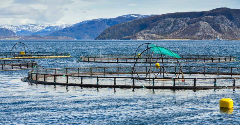 Norjassa lohta kasvatetaan rannikolla olevissa merialtaissa.