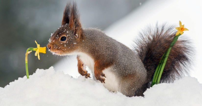 Lunta oli kuukauden lopussa Pohjois- ja Keski-Lapissa.