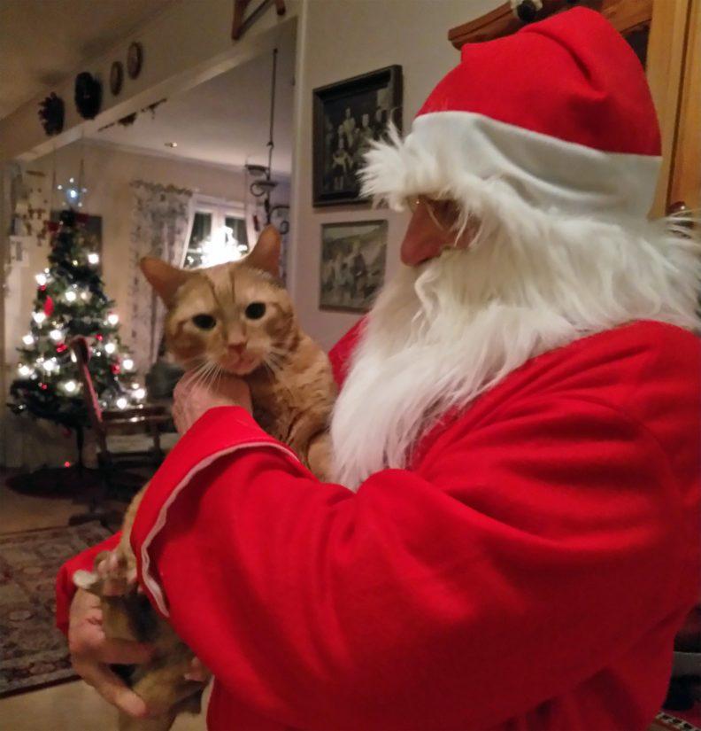 Ossi-Petteri on joulun ihme, sillä erilaisuutensa takia Ossille ei luvattu tämän syntymäkodissa runsaita elämänpäiviä.