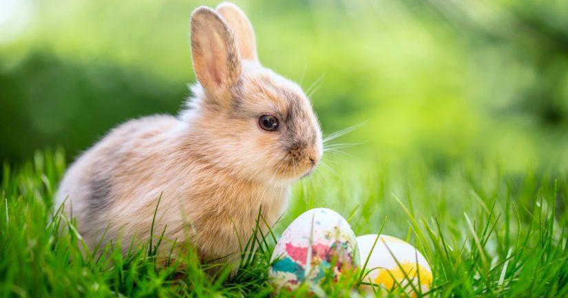 Pääsiäisruoho ja suklaamunat kertovat elämästä, joka voittaa kuoleman.